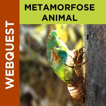Webquest - Metamorfose Animal