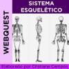 Webquest - SISTEMA ESQUELÉTICO