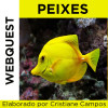 Webquest - Peixes